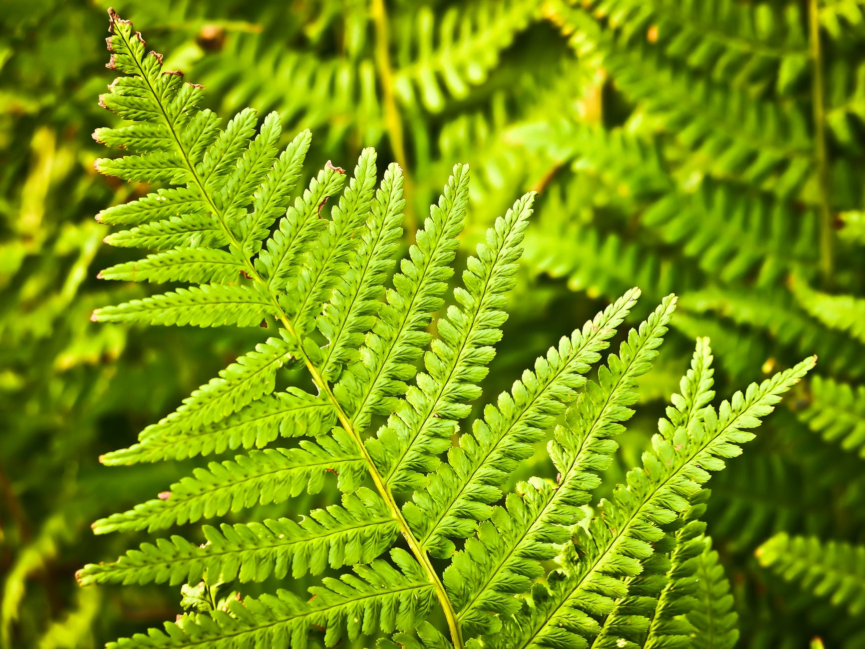 nature forest plant leaves
