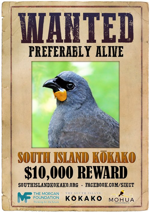 SI+kokako+wanted+poster.++Original+image+of+NI+kokako+by+Tara+Swan,+creative+touches+by+Oscar+Thomas+and+Geoff+Reid